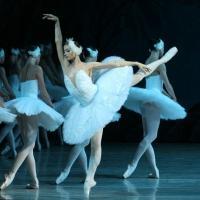 St. Petersburg Ballet Presents SWAN LAKE This Weekend