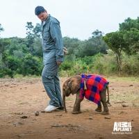Animal Planet Premieres Documentary SAVING AFRICA'S GIANTS WITH YAO MING Tonight