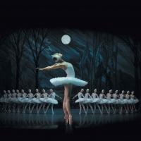 St Petersburg Ballet Theatre Announces Additional Performance of SWAN LAKE in Melbourne