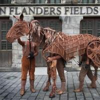 Photo Flash: WAR HORSE Author Michael Morpurgo & 'Joey' Visit Ypres