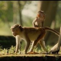 VIDEO: Meet Maya & Kip in New Trailer for Disneynature's MONKEY KINGDOM