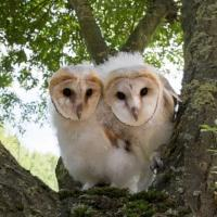 NATURE'S OWL POWER Airs 2/18 on PBS