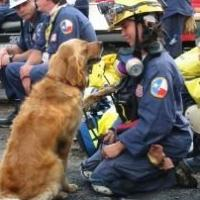 Mission Manager Teams Up with the American Humane Association to Enhance Animal Rescue Efforts