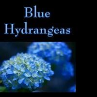 BLUE HYDRANGEAS to Soon Be Released as and Audiobook on Audible, Amazon and iTunes