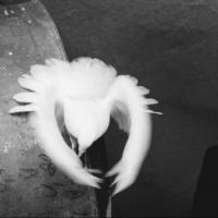The Cuban American Phototheque of Miami Presents Ivan Canas' Artist Talk Next Saturday February 15 at 7 pm with Ileana Fuentes and Willy Castellanos