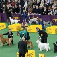 USA Network to Air 139th WESTMINSTER KENNEL CLUB DOG SHOW, 2/17