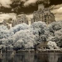 MOMENTS IN TIME, Susanne Brandt's Infrared Photos on Display at Studio Vendome Projects