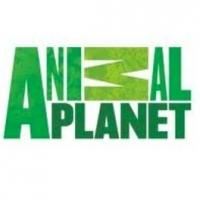 Animal Planet's ICE COLD GOLD Returns 3/5