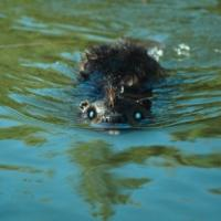 Horror Comedy ZOMBEAVERS Coming to DVD, 5/19