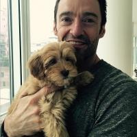 Hugh Jackman Reveals Name of His New Christmas Puppy