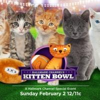 Hallmark Channel Hosts First Annual KITTEN BOWL Today