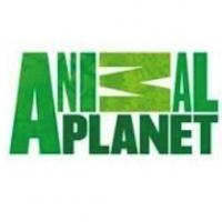 Animal Planet Scores Most-Watched Month in Network History