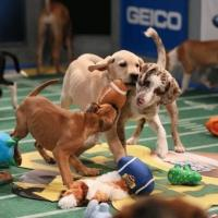 Animal Planet's PUPPY BOWL X Earns Record 13.5 Million Viewers