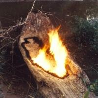Galerie Lelong to Present ANA MENDIETA: TRACES in March 2014