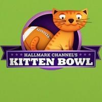 Hallmark Channel's KITTEN BOWL Draws 3.2 Million Viewers