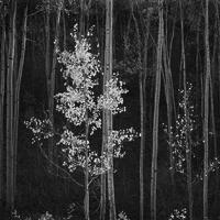 ANSEL ADAMS: CLASSIC IMAGES Exhibition Opens Today