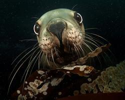 """Luminous Sea"" Donates 50% of Future Profits To The Ocean Foundation"