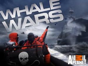 WHALE WARS to Return to Animal Planet with 2-Hour Event, 12/13