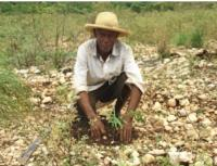Timberland Helps Haiti Plant 2 Million Trees, and Counting