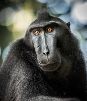 PBS's NATURE to Air The Funkiest Monkeys, 1/29