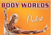 Discovery Times Square to Premiere BODY WORLDS: PULSE This Spring