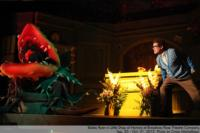 BWW Reviews: THE LITTLE SHOP OF HORRORS at Broadway Rose, a Well-Casted, 1950s B-Movie Romp