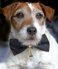 THE-ARTISTs-Uggie-is-Named-Spokesdog-for-The-Humane-Society-of-the-United-States-Pets-of-Valor-Award-20010101
