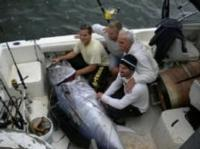 Discovery Channel's New Series FIGHTING TUNA Depicts Cape Cod Fishing