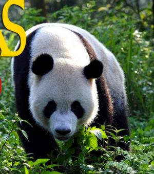 Joely Richardson Narrates PANDAS: THE JOURNEY HOME, Opening in IMAX & More
