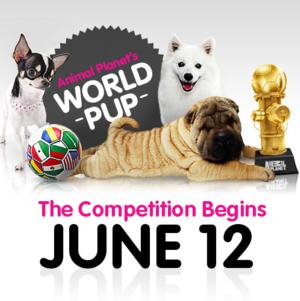 Animal Planet to Premiere WORLD PUP Online Competition, 6/12