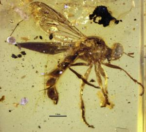 National Museum of Natural History Scientist Torsten Dikow Discovers New Species of Assassin Fly