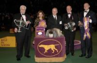 USA to Air 137th WESTMINSTER KENNEL CLUB DOG SHOW, 2/12