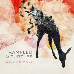 Trampled by Turtles' 'Wild Animals' Now Out; Set for Tonight's LETTERMAN