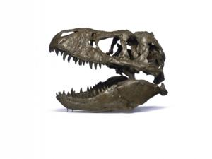 The National Museum of Natural History Announces that the Tyrannosaurus Rex Skeleton It Obtained Will Arrive 4/15