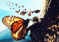 Flight of the Butterflies 3D Soars Into The Henry Ford IMAX Theatre Today
