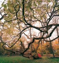 Benjamin Swift's NEW YORK CITY OF TREES Exhibition to Open at Arsenal Gallery, 3/6-4/26