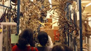 The Royal Ontario Museum Offers Free Admission During ROM Revealed Weekend