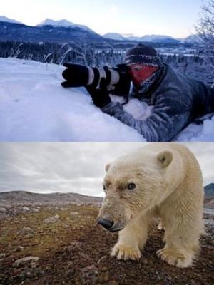 National Geographic Photographer Paul Nicklen to Present POLAR OBSESSION at the Mayo Center, 4/22