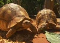 CBS's 60 MINUTES Reports on Madagascar Tortoise Poachers Tonight