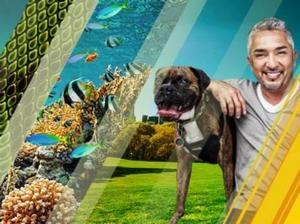 Nat Geo WILD Announces Refreshing Summer Programming Slate