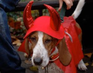 Puppies to Dress Up For Halloween in Central Park Tomorrow