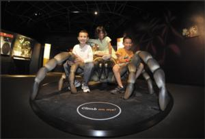 The American Museum of Natural History Presents SPIDERS ALIVE!, Opens 7/4