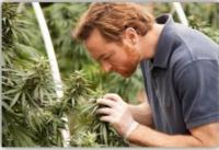 Discovery Channel to Premiere Six-Part Series WEED COUNTRY, 2/20