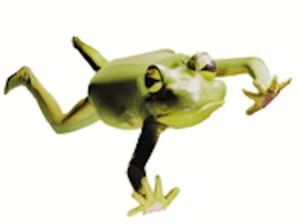 FROGZ! Headed to Orpheum Theatre, 2/21-22
