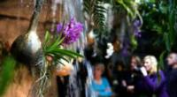 Cleveland Botanical Garden Offers Sweet Escape for 10th Annual Orchid Mania