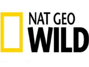 Nat Geo WILD Announces One-Hour Special GIANT PANDAS