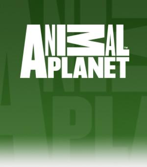 Animal Planet to Premiere WOMAN RAISED BY MONKEYS, Today