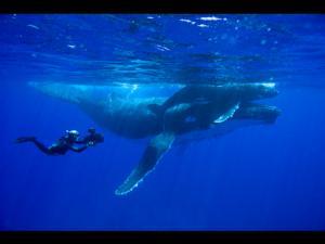 Wildlife Filmmaker Doug Allan Kicks Off 2014 UK Speaking Tour Today