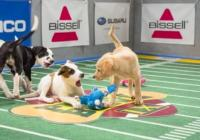 Animal Planet Premieres PUPPY BOWL IX Today