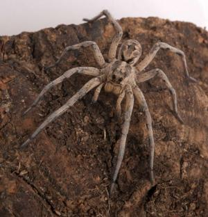 The American Museum of Natural History Presents SPIDERS ALIVE!, Opening 7/4
